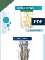 8. Configuracion Externa de La Medula Espinal- Del Nogal
