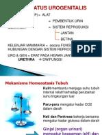 14 Sistem Uropoeitica