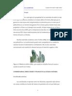 yby disloca.pdf