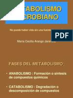 metabolismo1-2