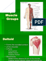 Major Muscle Groups-Haley Vest