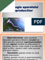Aparatul reproducator