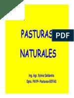 26 - Pasturas Naturales