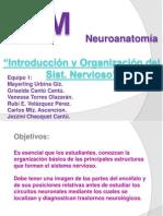 1 Introducción y Organización Del Sistema Nervioso (Equipo 1)