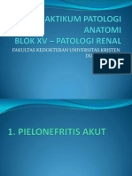 Penuntun Praktikum Patologi Renal