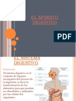 Digestion BIO 014