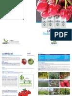 Brochure Gabriel Bz