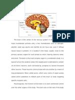 Ana and Physio of Brain