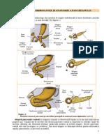 Date Embrio Anatomie