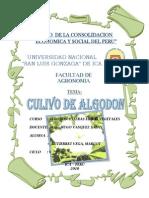 Algodon_trabajo de Algodonero