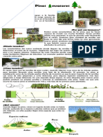 Pino.pdf