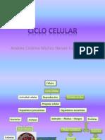 Esquemas de La Mitosis, Meiosis y El Ciclo Celular