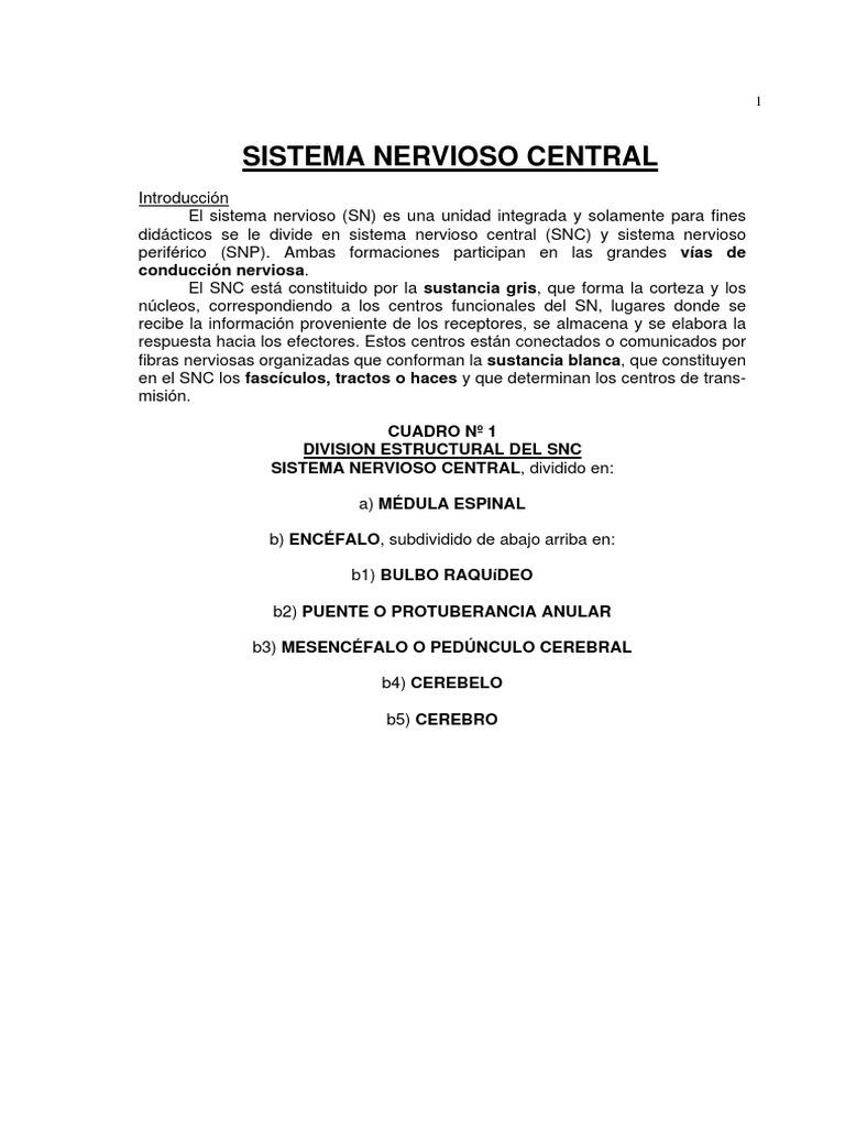 Sistema Nervioso Central, Periferico y Autonomo