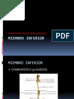 HUESOS DEL MIEMBRO INFERIOR.pptx