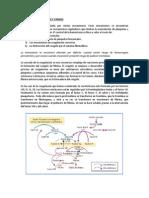 Sistema de coagulación y cininas.docx