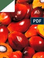 Les bénéfices de l'huile de palme (texte paru dans le Soir.be)