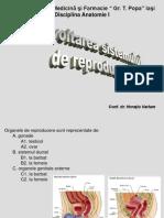 Curs -Dezvoltarea Sistemului de Reproducere
