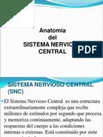 4-Anatomia Sistema Nervioso Central