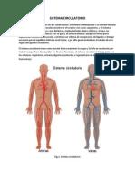 Sistema Circulatorio Seminario