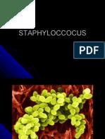 Staphyloccocus