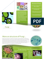 Fungi Factfile