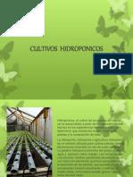 diapositivas hidroponicos