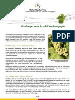 Vendanges Sous Le Soleil en Bourgogne