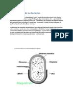 Generalidades de las bacterias.docx