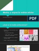 Matriz y Espacio Extracelular