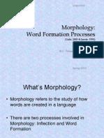 morpholog