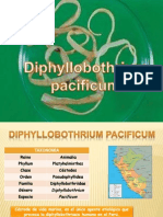 diphyllobothrium pacificum
