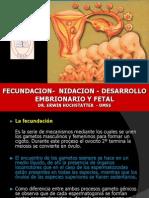 4 Fecundacion Nidacion Desarrollo Fetal