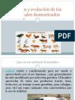 Origen y evolución de los animales domesticados.pptx