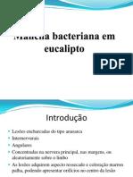 Mancha Bacteriana Em Eucalipto