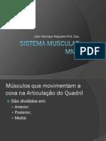 Sistema Muscular MMII