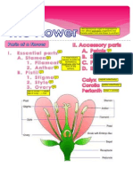 Exp. 7 - The Flower