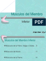 Musculos Extrem.inf.