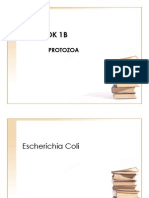 Protozoa(1)