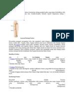 Definisi Fraktur Femur