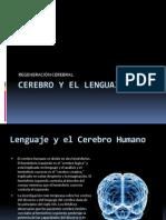 Cerebro y El Lenguaje