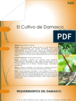 El Cultivo de Damasco