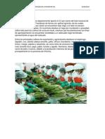 Produccion de Frutas y Hortalizas en La Region Ica