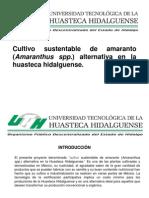 Cultivo Sustentable de Amaranto