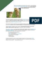 Catalogo de Plagas