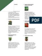 25 Plantas Sin Flor Con Flor