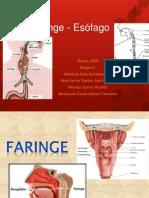 2.- FARINGE-ESOFAGO