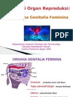 14-Sistem Reproduksi Betina