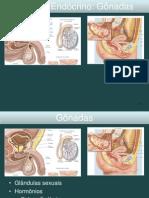 2014.2 Embriologia DO SIST GENITAL Modulo II