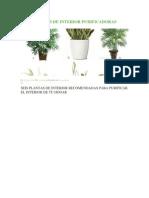 Plantas de Interior Purificadoras