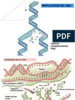 Clase Genoma-Proteinas